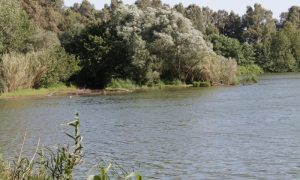 Lago di Falciano - storie di avvistamenti e coccodrilli
