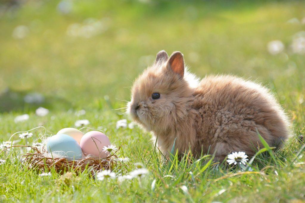 Pasquetta 2019 A Caserta, un tenero coniglietto