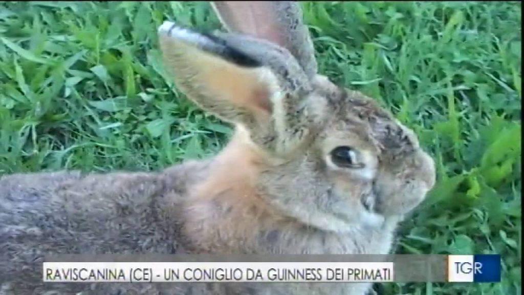 Il coniglio di Raviscanina su Rai 3
