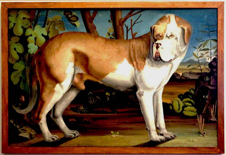 I Borbone e i cani:Ritratto Di Uno Dei Cani Alla Reggia Di Caserta