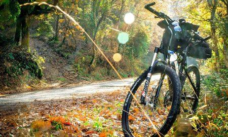 pedali fuori porta - Bici Nel Bosco
