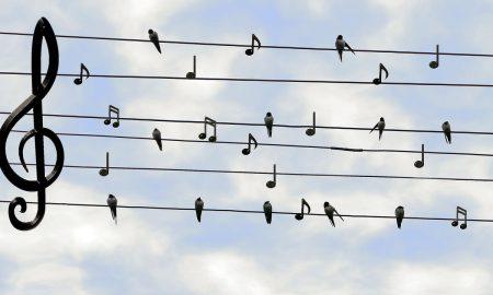 Festa della Musica 2019: un pentagramma con dei simpatici uccellini