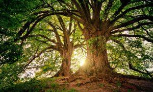 Alberi: il boschetto di Centurano e la natura da salvare