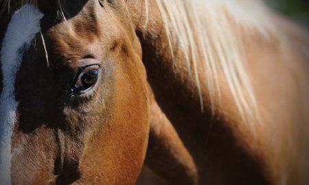 Cavallo Dolce