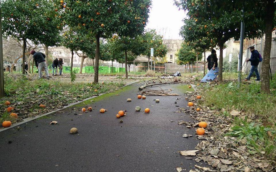 arance di villa Giaquinto: gli alberi