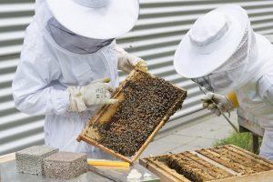 Social In Soccorso dell'apicoltore