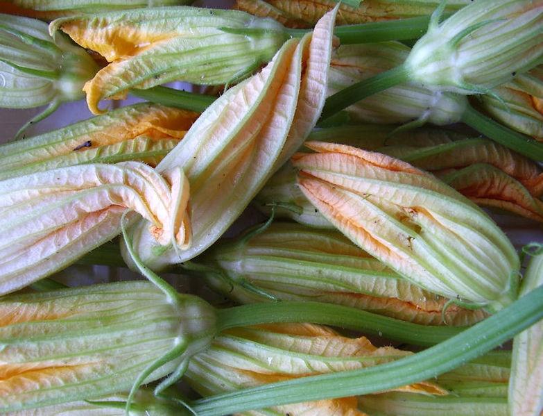 Fiori Di Zucca - foto di fiori di zucca mondati