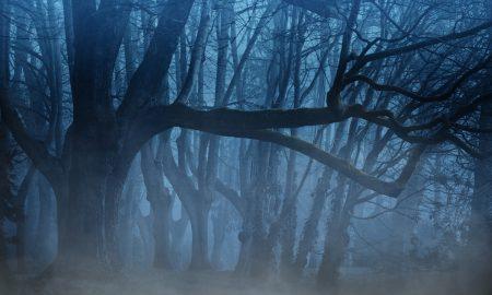 Casa Fantasma Nebbia Nel Bosco