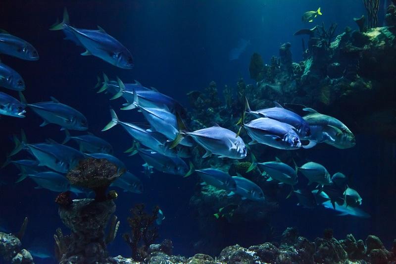 Visite Virtuali Acquario Di Genova