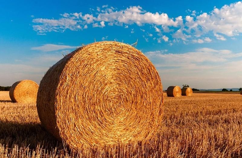 giovani e agricoltura - Balle Di Fieno