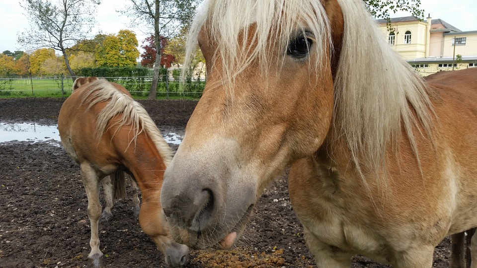 giovani e agricoltura - Cavalli vicino un laghetto
