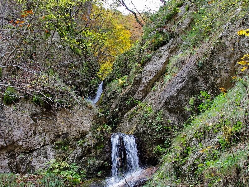 Flora E Fauna Parco Nazionale La Camosciara