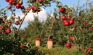 Giovani E Agricoltura Lavori In Campagna