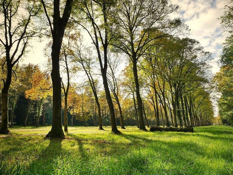 Parco Alberi