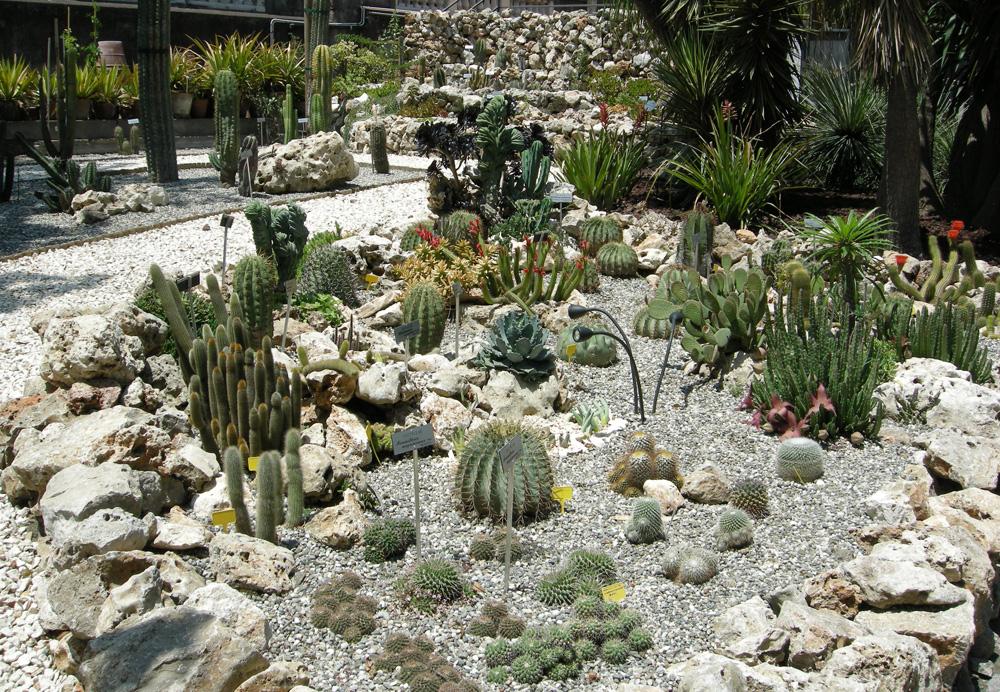 Succulente, Orto Botanico