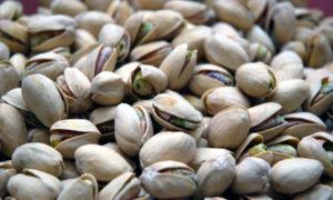 Il tradizionale pistacchio di Bronte appena raccolto