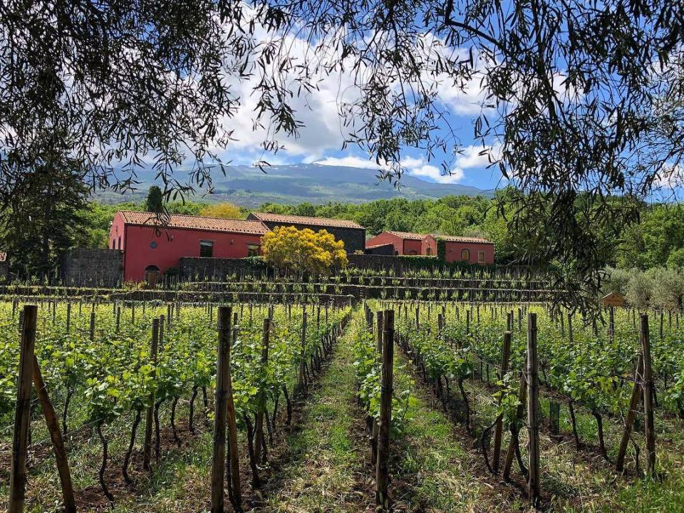 cantina terrazza dell'Etna, strada del vino dell'Etna