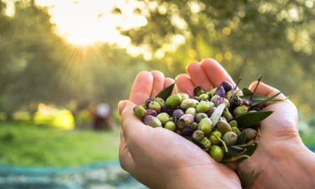Olives Crete D
