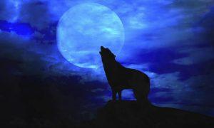 Notte di luna piena: l'habitat ideale di un lupo mannaro. Fonte foto: pazienti.it