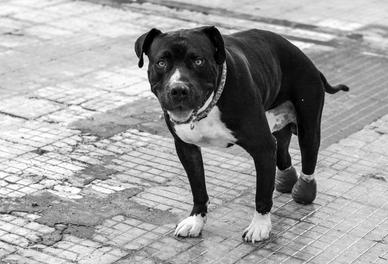 Bianca e il suo amore per Marco, cane adottato dalla Lida di Catania