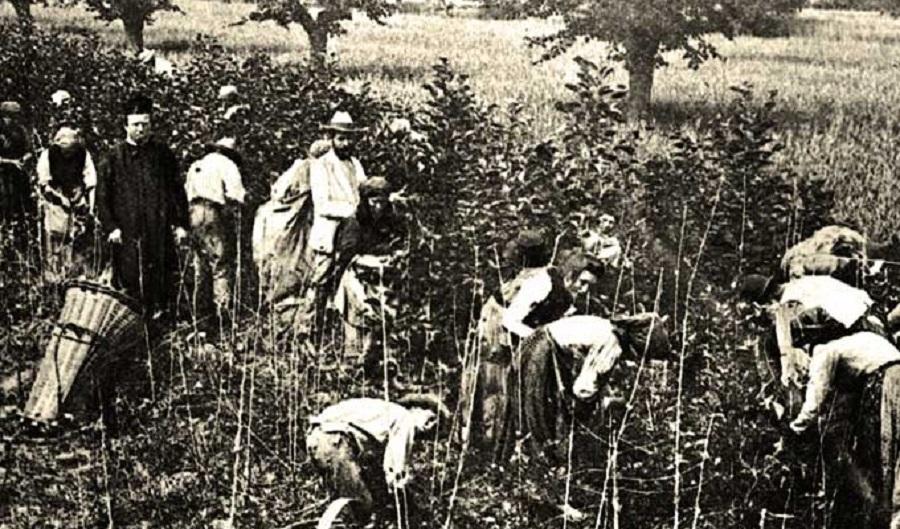 Produzione della seta in Italia. Foto di: calabresi.com
