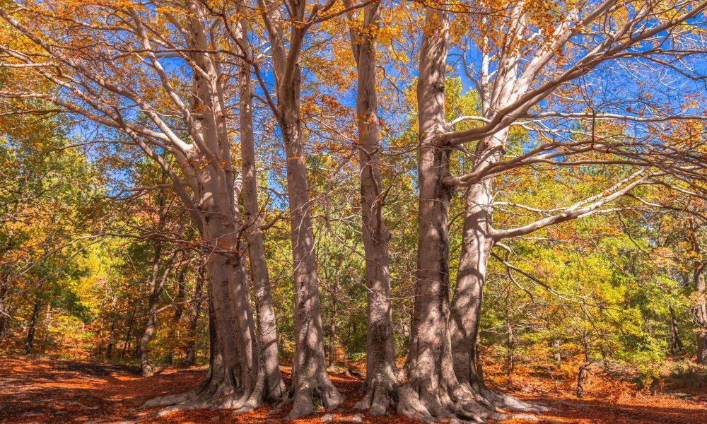 A trofa du camperi in autunno