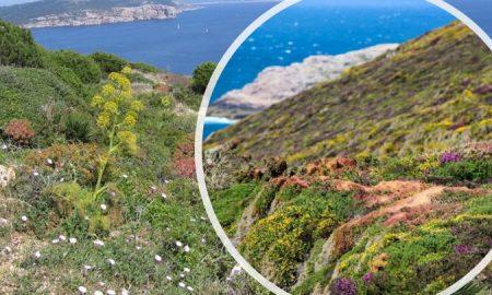 la macchia mediterranea e catania