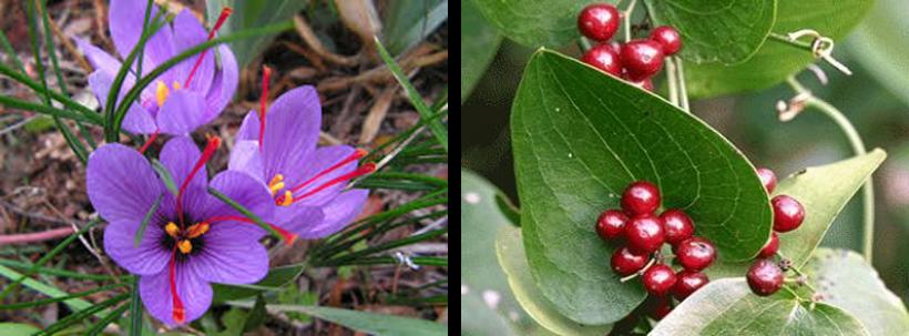 la macchia mediterranea e le piante aromatiche