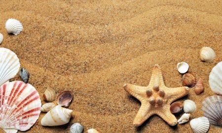 Spiagge libere: la sabbia e le conchiglie