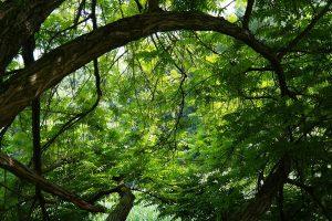 Boschetto un ramo verde- Foto:Pixabya