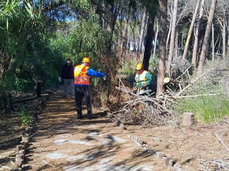 Boschetto della Playa in manutenzione - Foto: pagina facebook del Sindaco