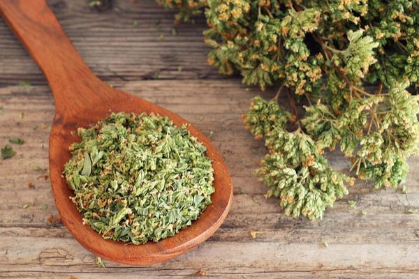 La pianta dell'origano è legata alla storia, all'uso versatile che ne hanno fatto i popoli in tutte le epoche e anche ai miti e leggende, proverbi, moti e curiosità.