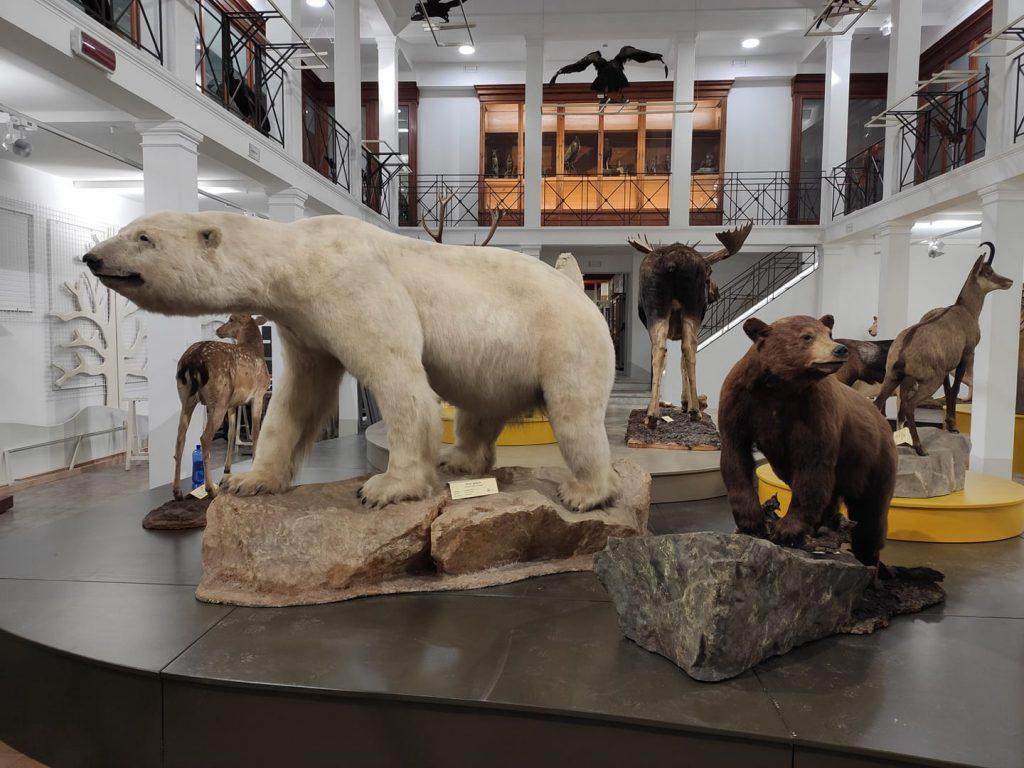 Alcune delle splendide collezioni che arricchiscono il museo di zoologia dell'Università di Catania.  qui esemplari di orsi  bianco e  Baribal.