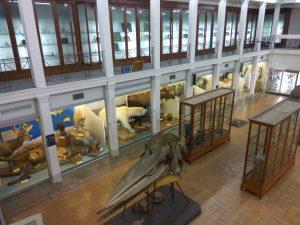 Il Museo Di Zoologia dell'Università di Catania è il più antico di Sicilia.