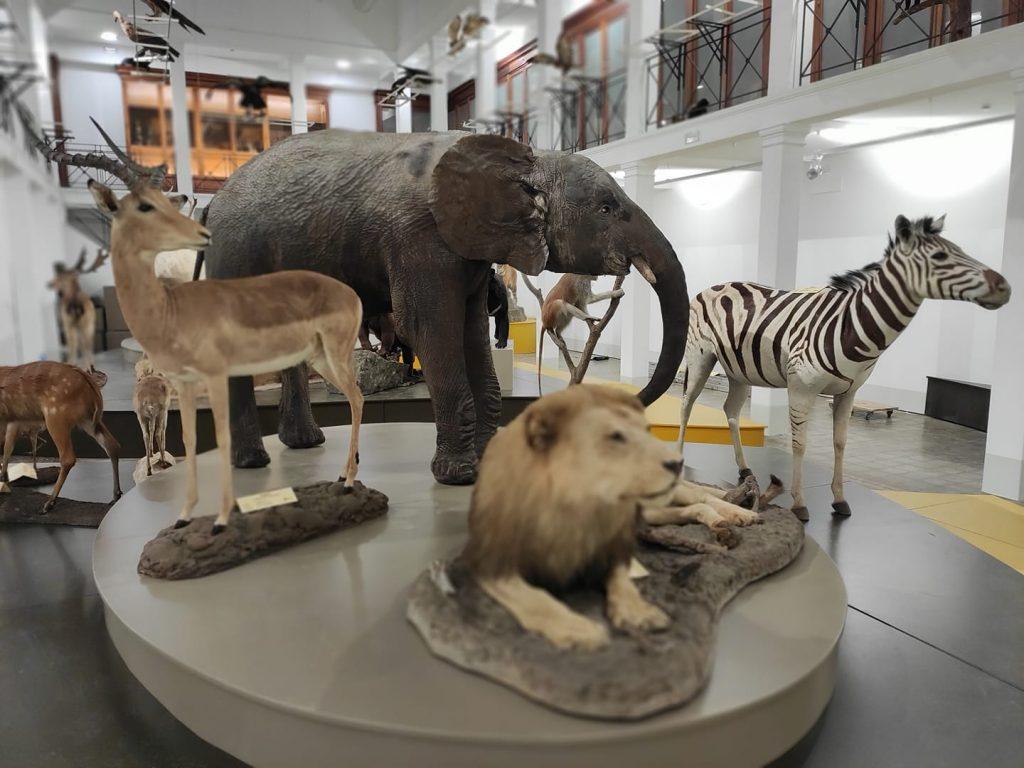 Alcuni degli animali esposti all'interno del museo di zoologia di Catania, il più antico della Sicilia. Nella foto gli animali della savana