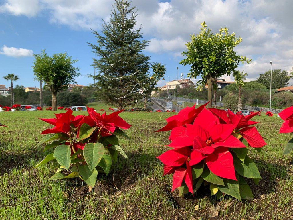 La rotonda  vicina alla stazione metro Nesima che immette su viale Bolano è stata abbellita in occasione delle festività di Natale con le classiche stelle  e piante di agrumi.