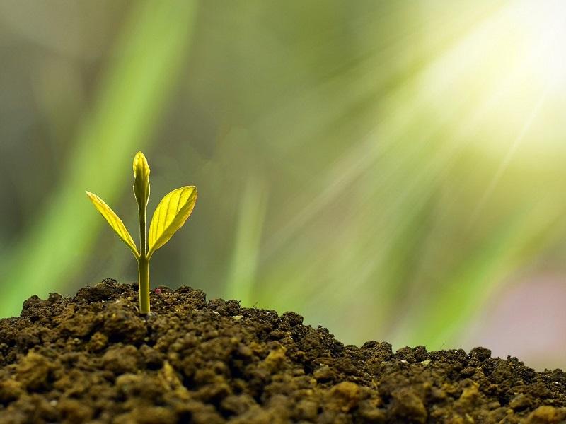 Ambiente- il Progetto di rinascita - Foto: Pixabay