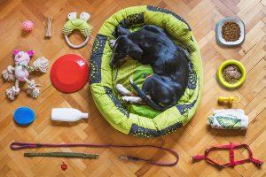 Catania Dog Card: la campagna per adottare dei cuccioli -Foto:Pixabay