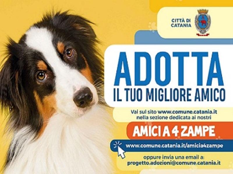 Catania dog card: la locandina del progetto- Foto: Comune di Catania