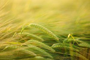 Bando -Terrenia gricoli - Foto: Pixabay