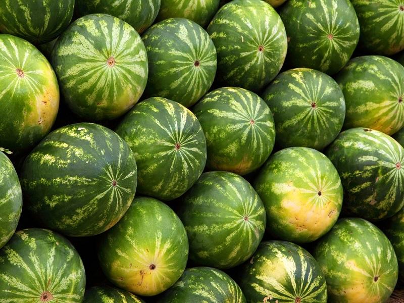 Anguria: un raccolto - Foto: Pixabay