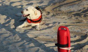 Cani da salvataggio - Foto: Pixabay