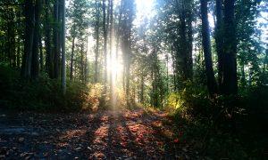 Conflenti Trekking: Camino alla Querciola