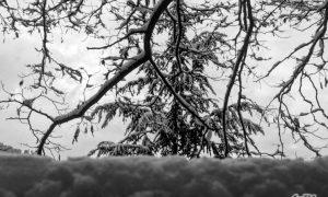 Neve A Conflenti