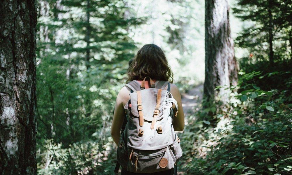 percorso: falerna e il mancuso Trekker