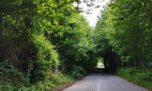 Frazioni: strada dritta tra gli alberi