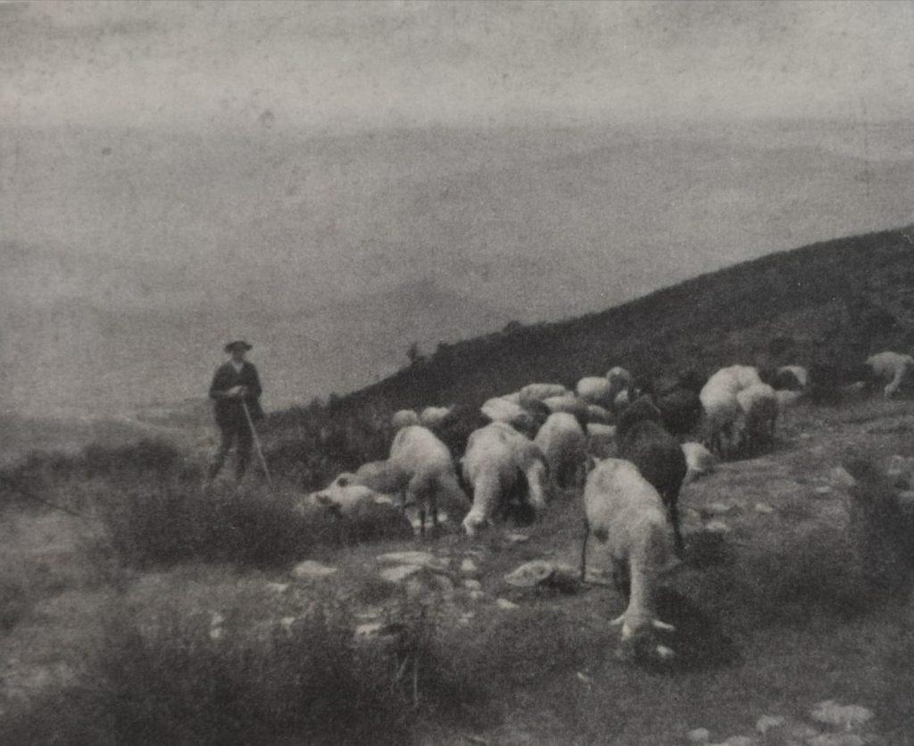 Pastore Con Pecore