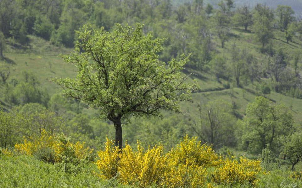 Natura... di Emarox