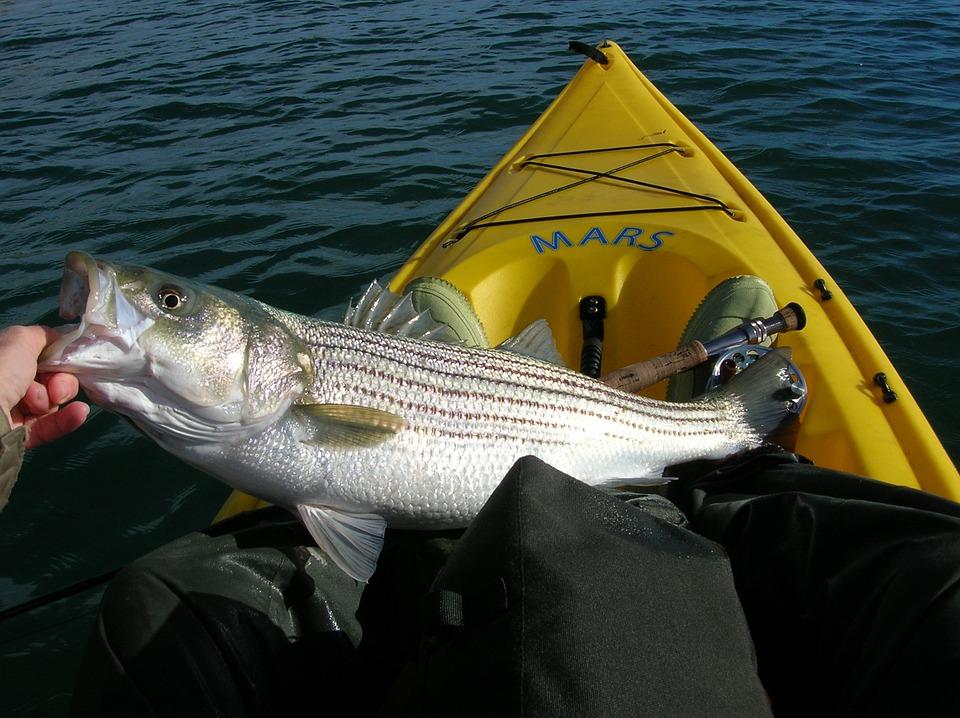 i pesci che vivono nel Po - Pescatore al lavoro