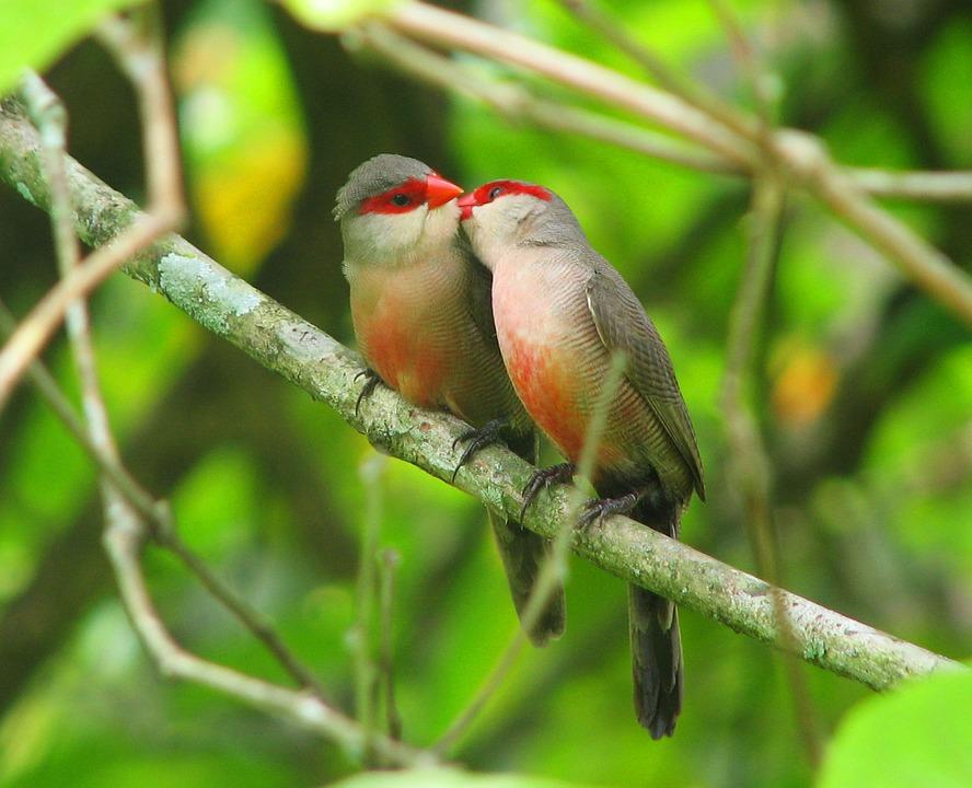 I balli nel Polesine - uccellini Innamorati
